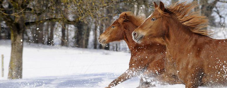 pferde_winter_leistungsangebot